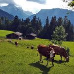 Blick vom Mayrberg nach Lofer